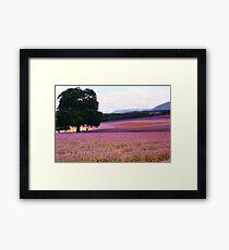 Lavender Farm Framed Print