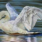 Beautiful Bird Art 2 by Phyllis Beiser
