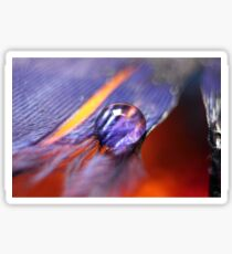 water droplet on feather Sticker
