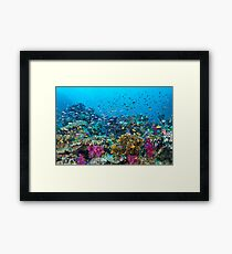 Fantasea Reef Framed Print