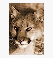 The perfect hunter Photographic Print