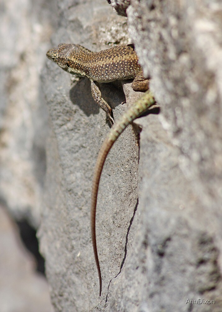 Wild Lizard by AnnDixon