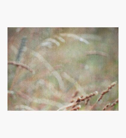 wild grasses 3 Photographic Print