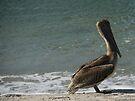 Brown Pelican by ValeriesGallery