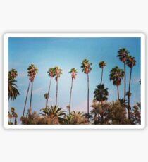 palm trees again Sticker