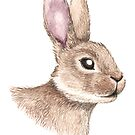Wild Rabbit by LCWaterworth