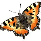 Tortoiseshell Butterfly by LCWaterworth