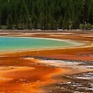 Colours of Yellowstone park by Susan P Watkins