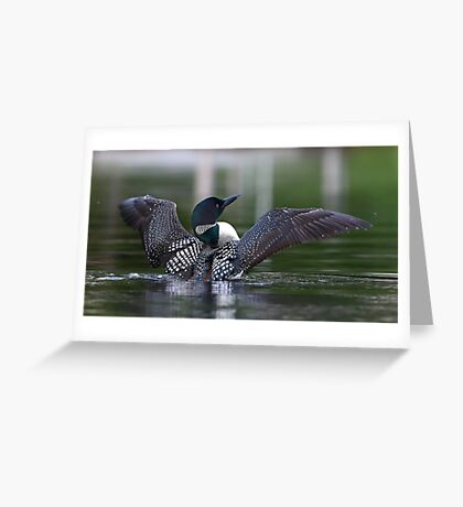 Common loon at 6am Greeting Card
