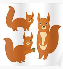 Fluffy Squirrels Poster