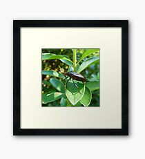 I'm just going for a walk ..... Framed Print