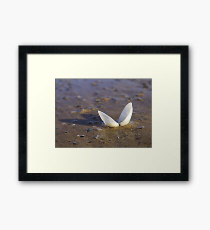 Cockle Shell  in Evening light at Fahan Framed Print