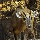 Autumn Deer by Helmar Designs