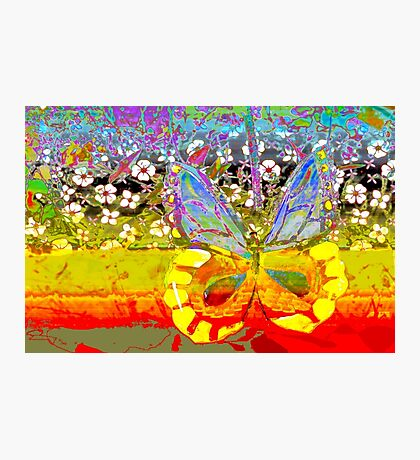 Butterfly and the garden wall Photographic Print