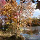 Delicate details of autumn by nealbarnett