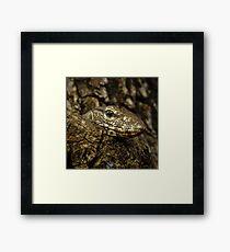 Varanus in tree Framed Print
