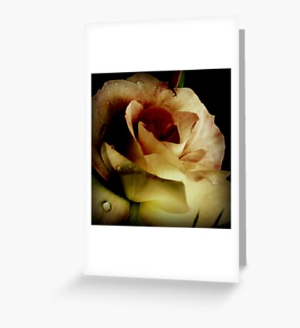 One Rose Greeting Card