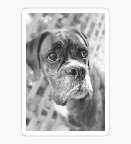 Es ist nicht fair - Boxer Dogs Series Sticker