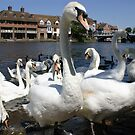 Swans in Windsor, England by Remo Kurka