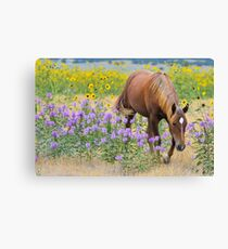 Summer Sorrel Canvas Print