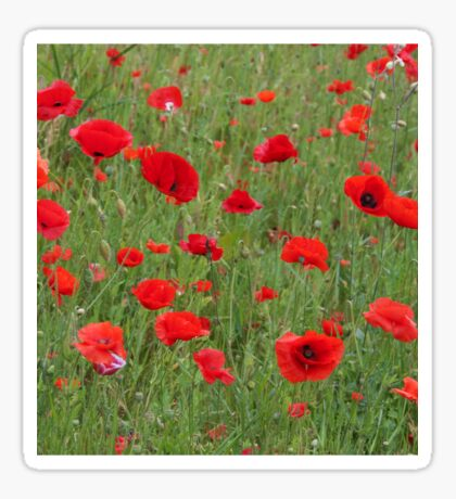 Field of poppies Sticker