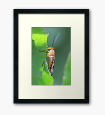 Clinging Insect Framed Print
