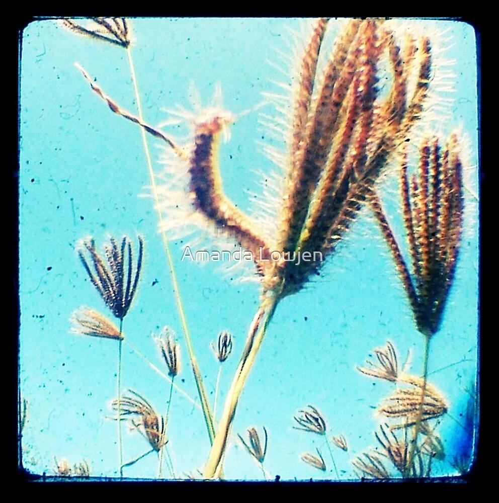 grassseeds by Amanda Lowjen