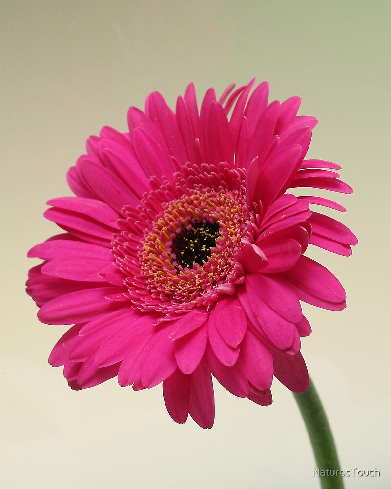 The Cheerful Flower.. by NaturesTouch