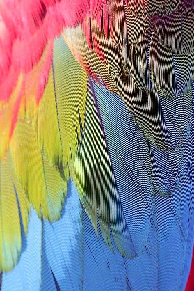 Scarlet Macaw Feathers by QWERTYvsDVORAK
