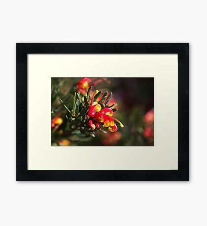 Ground Cover Grevillea Framed Print