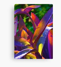 Raindrops On Colored Leaves Canvas Print