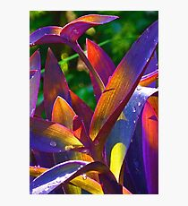 Raindrops On Colored Leaves Photographic Print