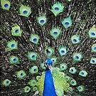 Vanity Has a Thousand Eyes by QWERTYvsDVORAK