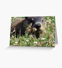Groundhog, Montreal Greeting Card