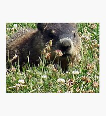 Groundhog, Montreal Photographic Print