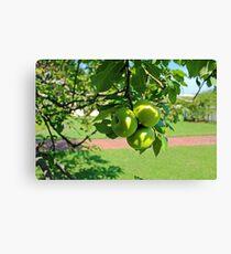 Lienzo Green Apples