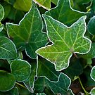 Frosted Leaves by Martie Venter