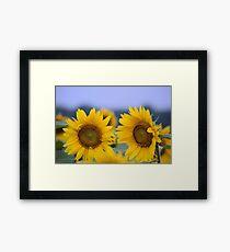 Sunny D Framed Print
