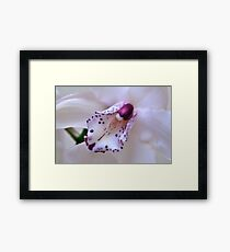 Orchid Heart. Framed Print