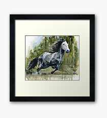 Running Andalusian Horse Framed Print