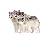 The Pack - Timber wolves by Jim Cumming