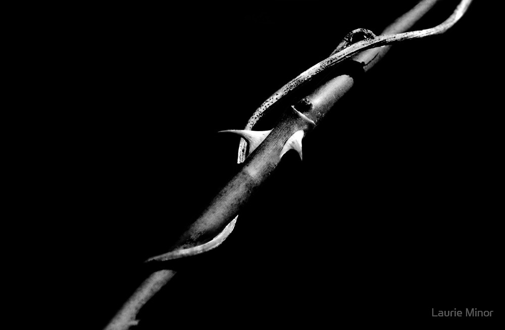 Thorns by Laurie Minor