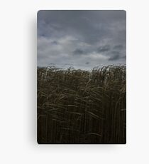Field - Color Canvas Print