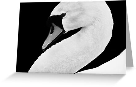 Swan by Laurie Minor