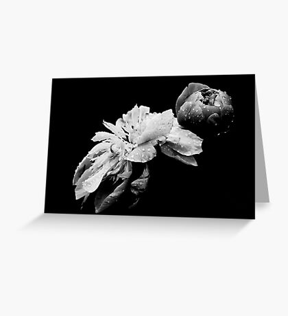 Peonies - After The Rain Greeting Card