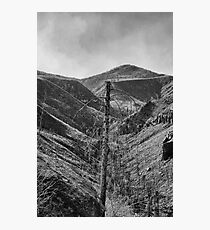 After The 2000 Cerro Grande Fire Los Alamos II Photographic Print