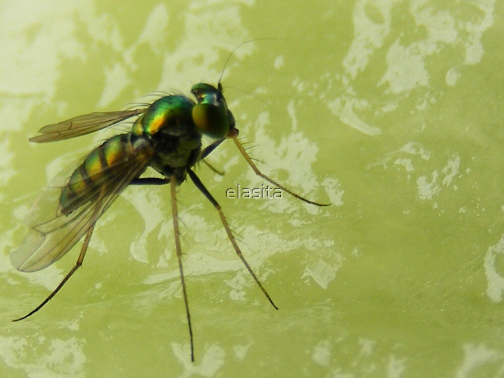 That fly is eating my melon! by elasita