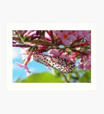 Heliotrope Moth  Art Print