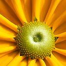 Yellow Untitled by elasita