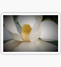 Magnolia macro Sticker
